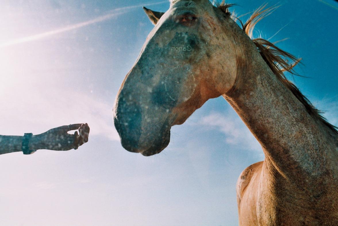 Horse wild